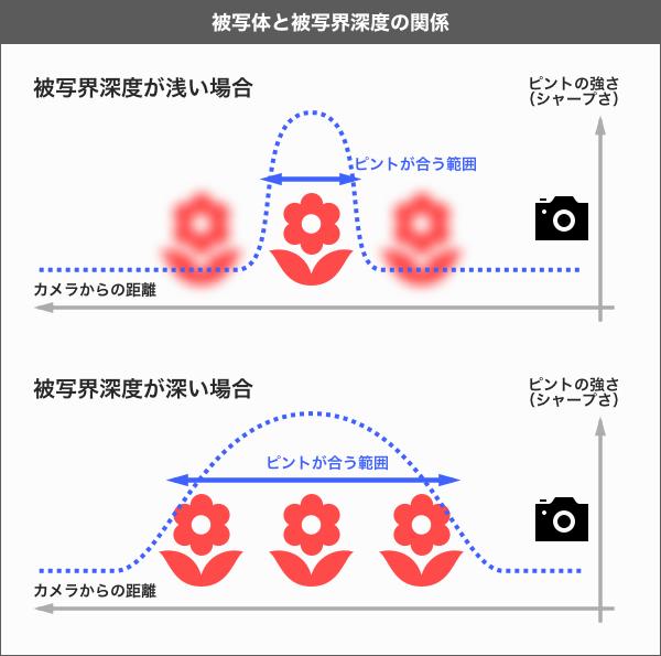 レンズで変わる画角とピントを決めるボケ範囲の被写界深度
