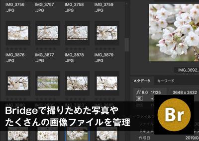 Adobe Bridgeで撮りためた写真やたくさんの画像ファイルを管理する