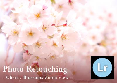 Lightroomでもっと綺麗な桜の写真を目指すレタッチとカメラワーク(望遠・ズーム編)