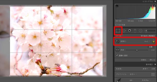 Lightroomでもっと綺麗な桜の写真を目指すレタッチ(望遠・ズーム編)